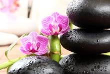 orchidée jumelle