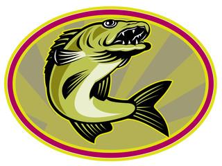 walleye fish jumping set inside oval ellipse with sunburst