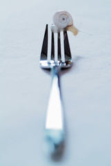 snail on fork