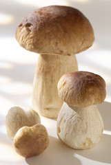 cep mushrooms - cut out product