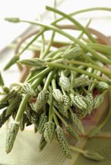 Basket of wild asparagus