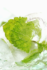 Fresh mint leaf in ice cube