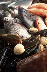 selection of seafood