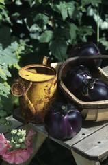 round aubergines