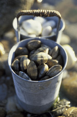 tin can of clams