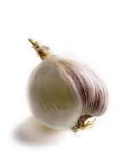Transgenic white onion-garlic