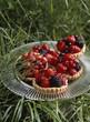 Summer fruit tartlet