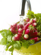 Washing radishes under the tap water