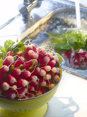 radishes in the kitchen