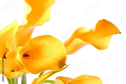 Fototapeta uroda - kwiat - Kwiat