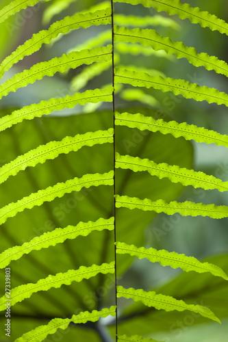 Plante exotique tropicale serre jardin plantation de for Plante exotique jardin