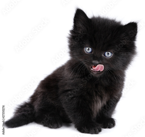 Black little kitten sitting down, licking, white background