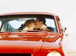 Couple Kissing In Antique Car