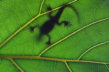 Lizard stay on leaf in backligh