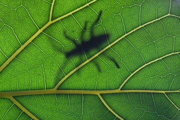 Bug stay on leaf in backlight