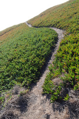 Ice Plant Field with Dirt Path