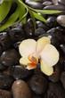 orchidée en pleine nature