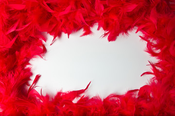 frame with the texture and bright red feathers