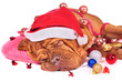 Santa Fell Asleep