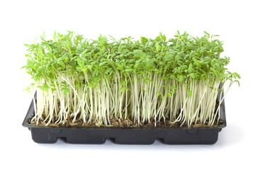 Cress isolated on white background