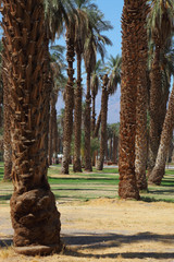 Palm avenue in the oasis