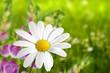 Blumen 184