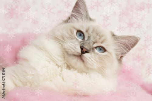 Plexiglas Lynx christmas kitty pink