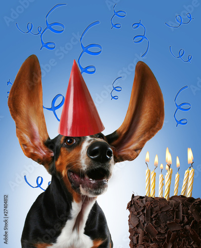 basset hound birthday