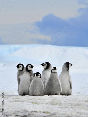 Plexiglas Antarctica Emperor Penguin