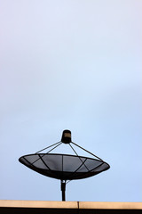 Satellite dish on sky