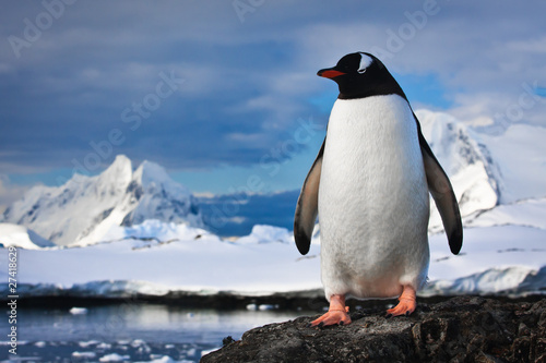 Foto op Canvas Poolcirkel penguin on the rocks