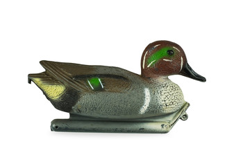 Isolated decoy duck