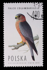 Poland - CIRCA 1974: A stamp - Falco Columbarius