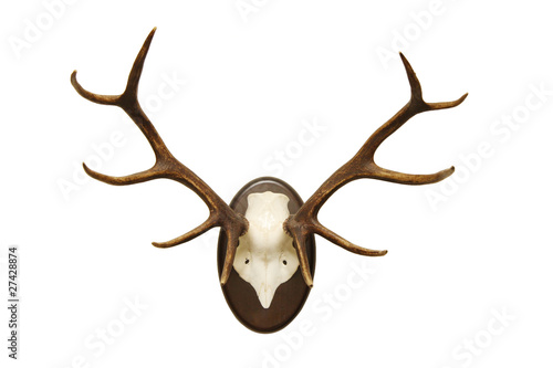Fotobehang Hert antlers of a huge stag, mounted on a wooden plate