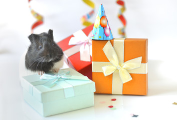 guinea pig and gifts