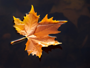 Herbst Laub Blatt im Wasser 2