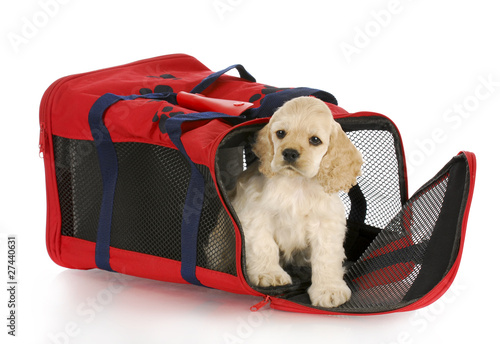 puppy in a dog crate bag