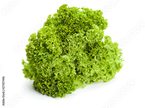 lollo bionda lettuce isolated