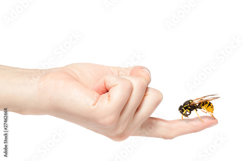 Foto op Aluminium Bee Female hand holding a big wasp, isolated on white background
