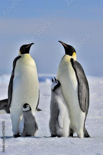Aluminium Antarctica Emperor Penguin