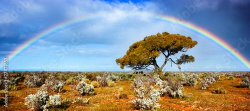 Rainbow Glory - 27471853