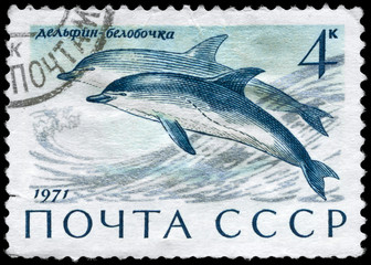 USSR - CIRCA 1971 Common Dolphin