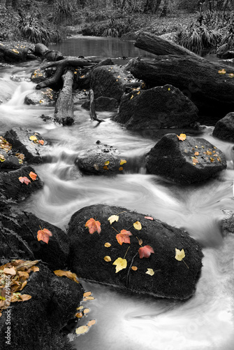 autum river