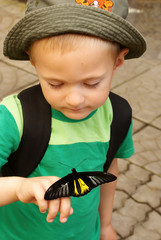 The boy holds a black butterfly on his finger and looks at it