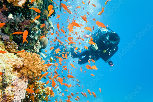 Diver na rafie koralowej