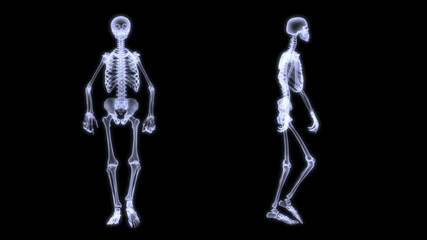 Slow motion radiography of a human skelegon walking