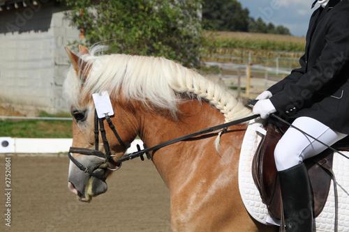 Pferd und Reiterin beim Reitturnier