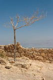 Dry tree on the ruins of ancient fortress in the desert