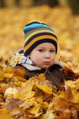2 years old baby boy in autumn leaves
