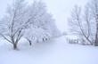 chemin de neige - 27546014